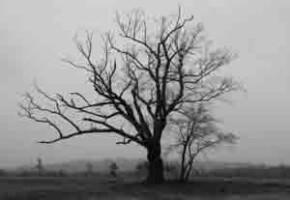 Дерево Дьявола, мистика древних легенд