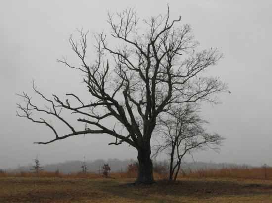 паранормальные силы и демоны умеют вселяться в деревья