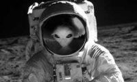Пришельцы любили отдохнуть на Земле