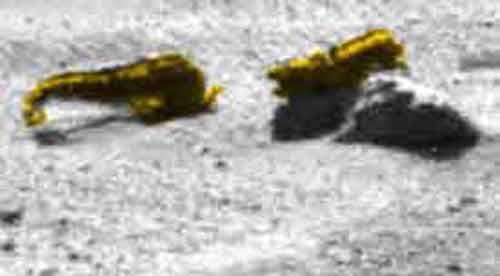 marsianskie-krevetki