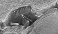 Звездные врата на Марсе
